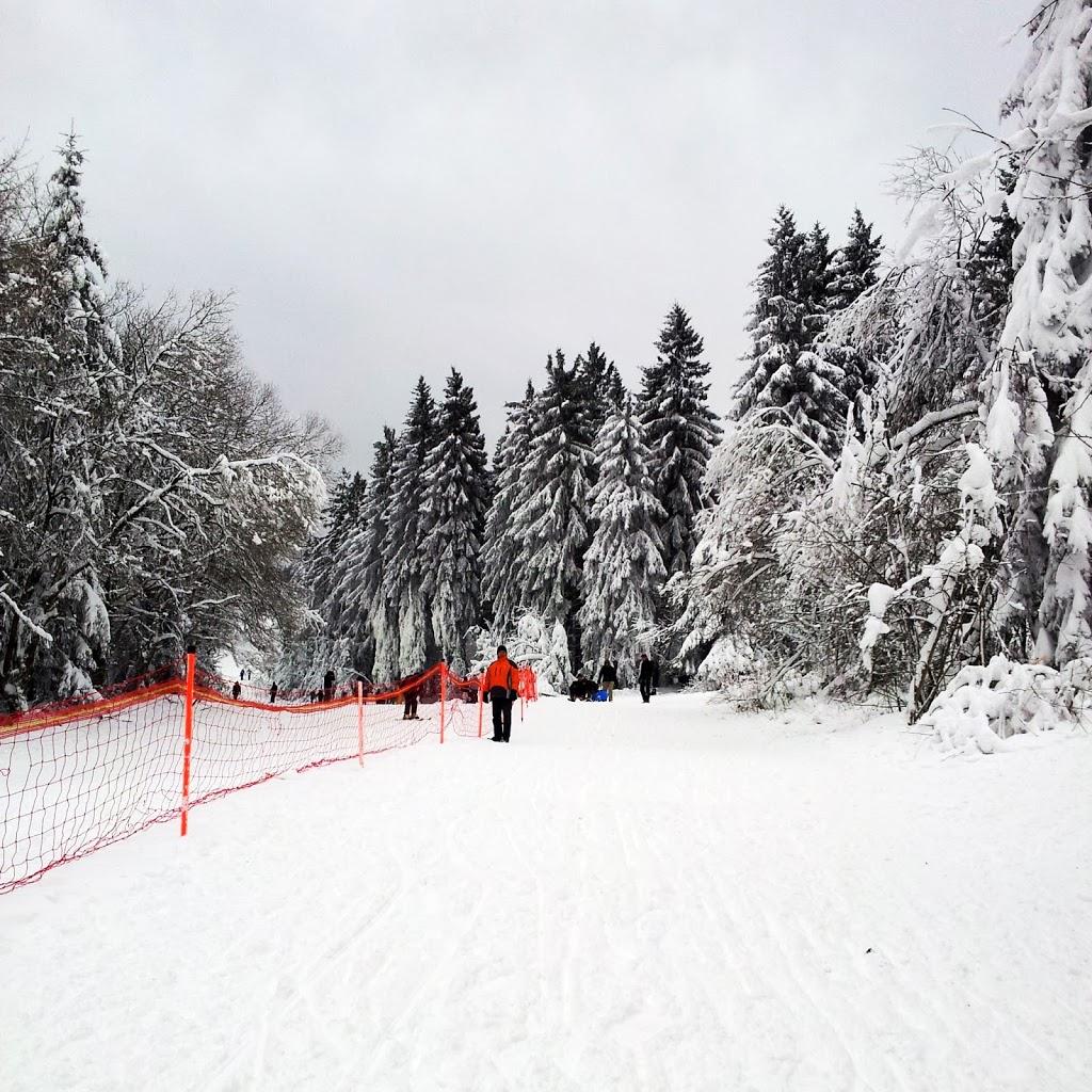 Schlittenfahren im Harz Image