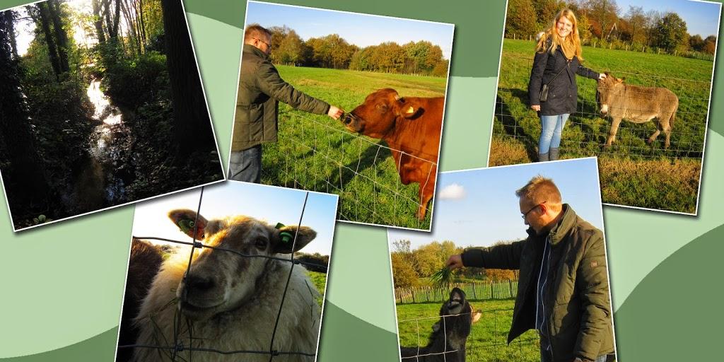 Fabis Abenteuer in Holland Image