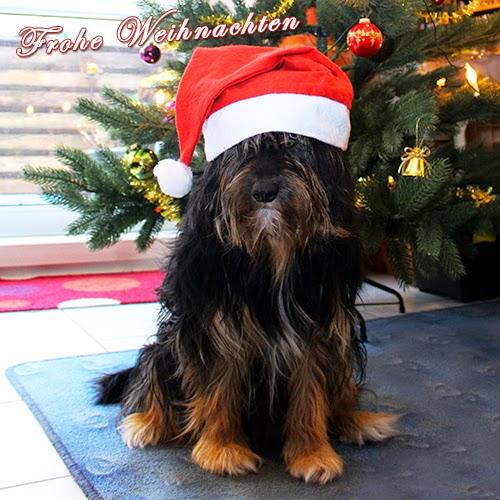 Weihnachtsgrüße 2014 Image
